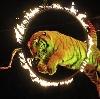 Цирки в Ивановке